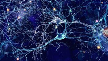 108927267-Whitehoune-Dreamstime-INP Multifocale Motorische Neuropathie MMN