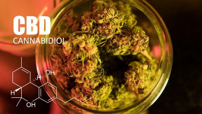 115161247-Kirill-Vasilev-Dreamstime-INP Palmitoylethanolamide (PEA) cannabis