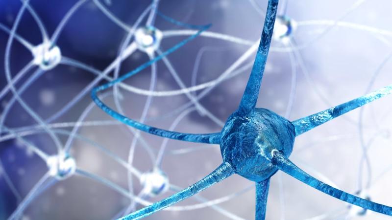 123772907-Stanislav-Rykunov-Dreamstime-INP-Instituut-voor-Neuropathische-Pijn mechanismen neuropathie