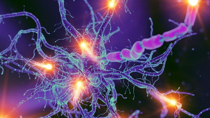 128912813-Sebastian-Kaulitzki-Dreamstime-INP Cardiovasculaire autonome neuropathie (CAN)