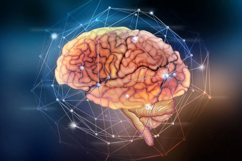 136161644-Siarhei-Yurchanka-Dreamstime-INP-Instituut-voor-Neuropathische-Pijn hersenen elasticiteit
