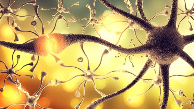 63203423-Oleg-Dudko-Dreamstime-INP-Instituut-voor-Neuropathische-Pijn dunne vezel neuropathie