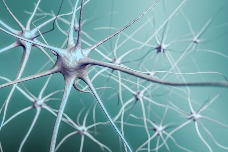 67084134-Vchalup-Dreamstime-INP-Instituut-voor-Neuropathische-Pijn neurogenese herstel zenuwen