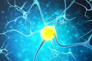 77653803-Rostislav-Zatonskiy-Dreamstime-INP-Instituut-voor-Neuropathische-Pijn schwann cel
