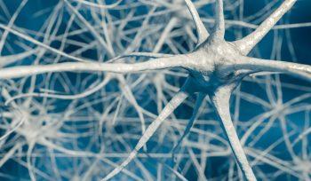 91233847-Vchalup-Dreamstime-INP-Instituut-voor-Neuropathische-Pijn neuropathie oorzaken