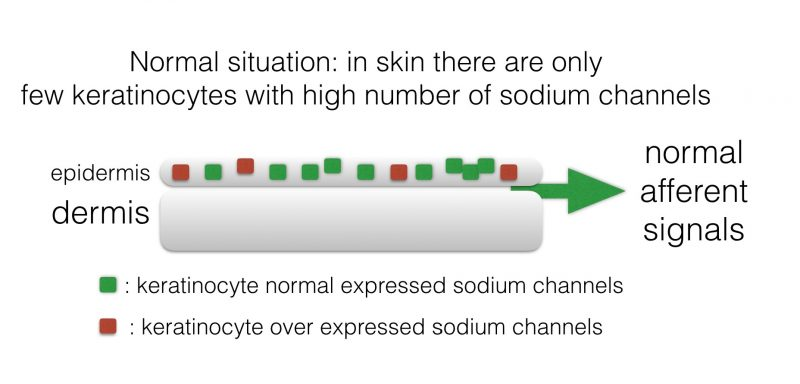 INP Phenytoin cream activity