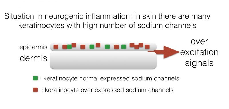 INP-Phenytoin-cream2 Phenytoin cream activity