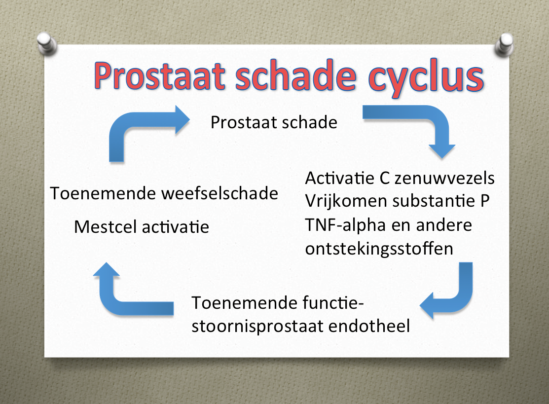 Chronische prostaatpijn behandelen met PEA