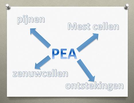 pea-mestcel-zenuwcel-INP-Instituut-voor-Neuropathische-Pijn.png