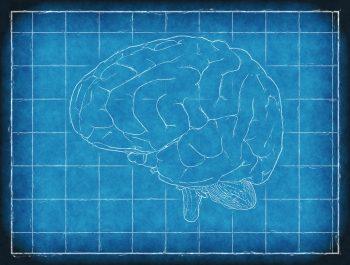 pixabay-1845941-INP.jpg hersenen pijn