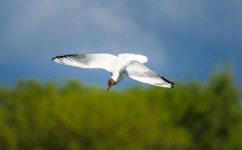 pixabay-2360989-INP albatros neuorpathie