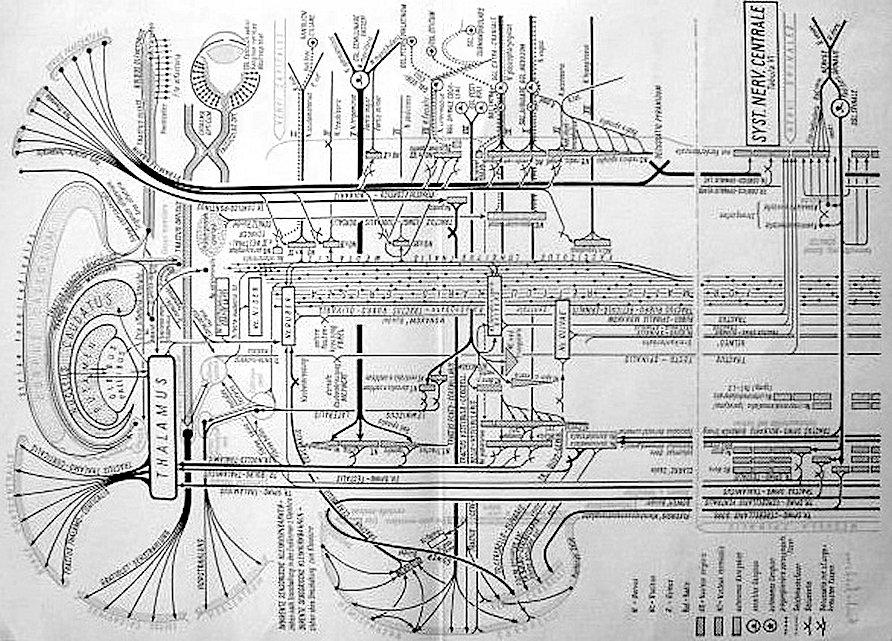 zenuwstelsel rails